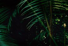 Festival Noches del Pacífico en La Pascasia