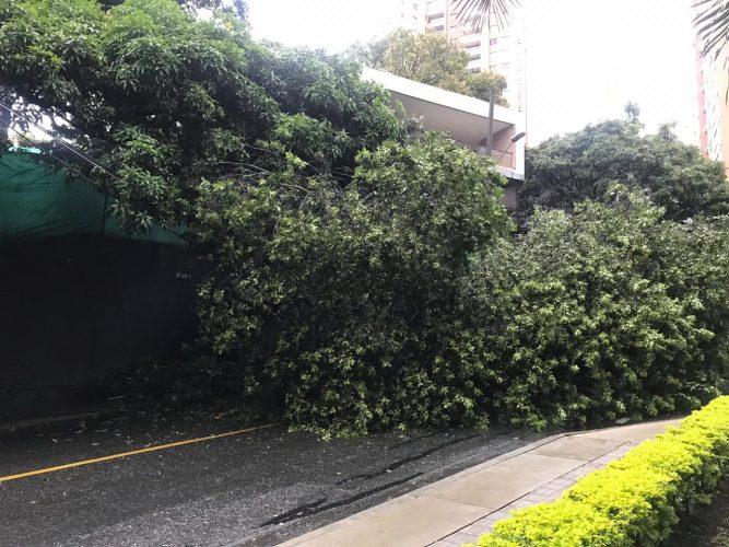 Árbol caído en Santa María de Los Ángeles