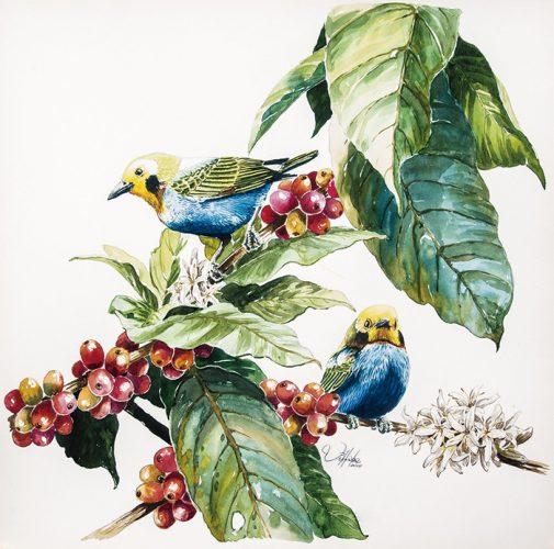 Tangara Multicolor