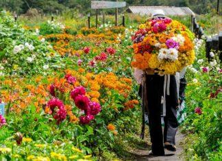 programación de la Feria de las Flores