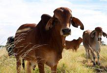 El impacto de la producción de carne en el planeta en el Medio Ambiente