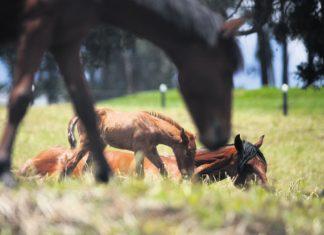Vacaciones en el campo. Los amaneceres, los atardeceres, los paseos a caballo, los de olla, bañarse en el río, montarse a los árboles.