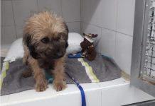 Perro rescatado de Hidroituango