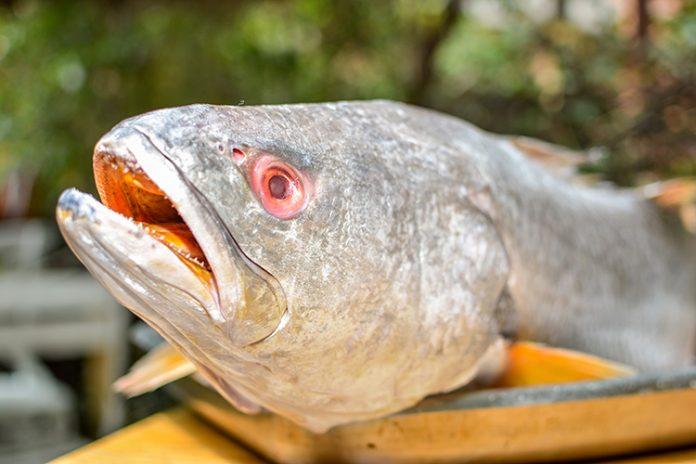 Criterios para ejercer un consumo responsable de pescado