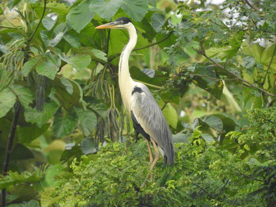 Especies Especies de aves identificadas Magdalena Medio antioqueñoaves identificadas Magdalena Medio antioqueño