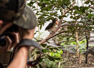 Gracias a eBird pueden hacer un monitoreo de especies de aves en colombia y el mundo. especies de aves en estación Cocorná, en el Magdalena Medio antioqueño