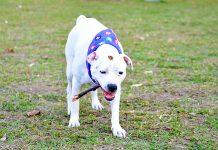 La endogamia en las mascotas