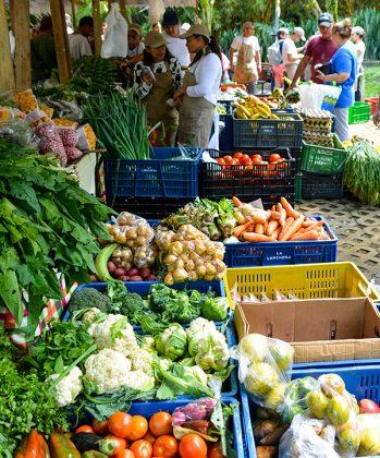 Mercados Campesinos
