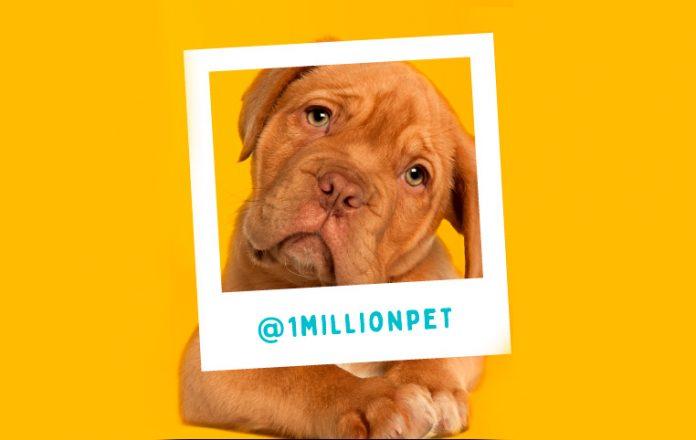 1 Million Pet en el Centro Comercial Oviedo