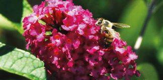 Taller sobre jardines para polinizadores