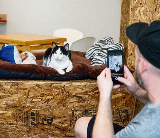 El Catfesito: un café con expresiones felinas