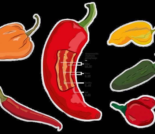 La Escala Scoville es la medida de picor de los ajíes. El picante en este fruto es dado por la capsaicina, un componente químico que estimula el receptor térmico en la piel.