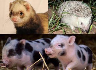Mascotas exóticas, su tenencia, riesgos y cuidados