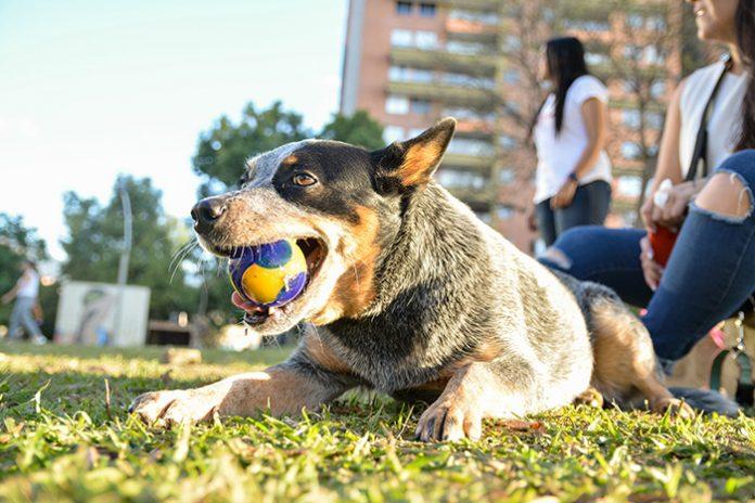 alimentación para perros