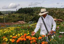 José Ángel hace parte de la Corporación de Silleteros de Santa Elena. Fotos Juan David Caicedo