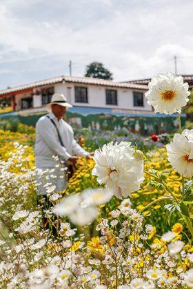 Silletero Feria de Flores Medellín