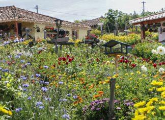Programación de la Feria de las Flores Medellín