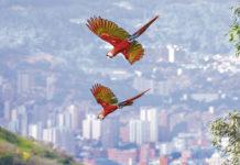 La cantidad de vida Silvestre delValle de Aburrá es impresionante, hermosa y valiosa. Formas, sonidos, plumas, colores, ojos, tamaños, picos