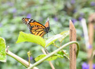 Mariposario del Jardín Botánico