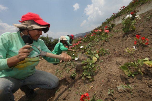 Moravia florece para la vida