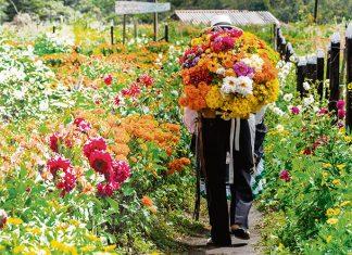 Feria de Flores Medellín