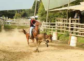 La vaquería nace de la actividad propia que se realiza sobre el caballo en las fincas para dirigir la ganadería.